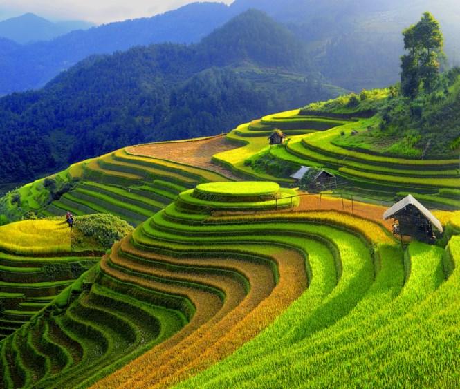 Nông nghiệp quy mô lớn