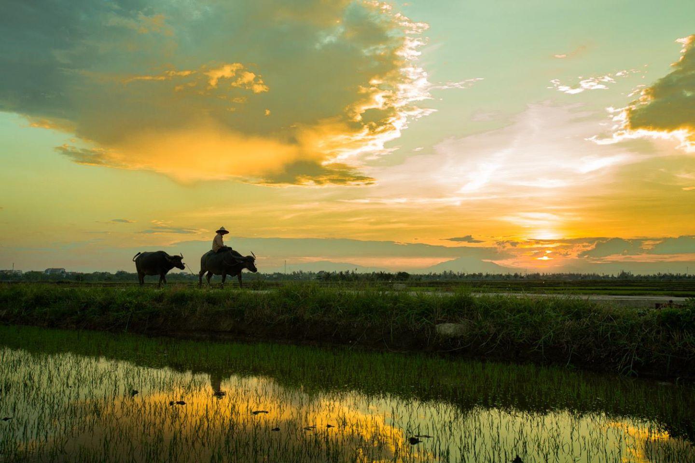 Nông nghiệp là một hoạt động chính của nhiều quốc gia. Hơn 50% dân số thế giới tham gia vào sản xuất nông nghiệp