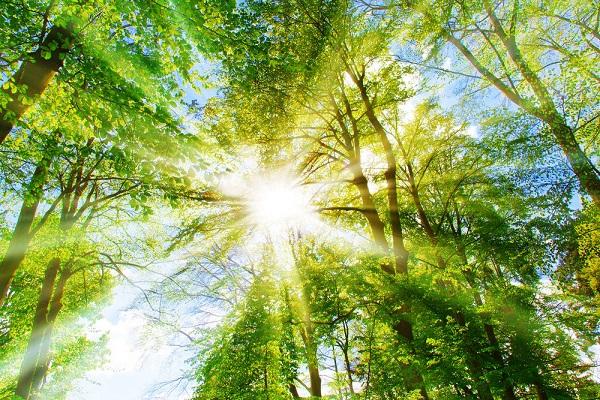Sinh Quyển hoạt động nhờ vào năng lượng Mặt trời