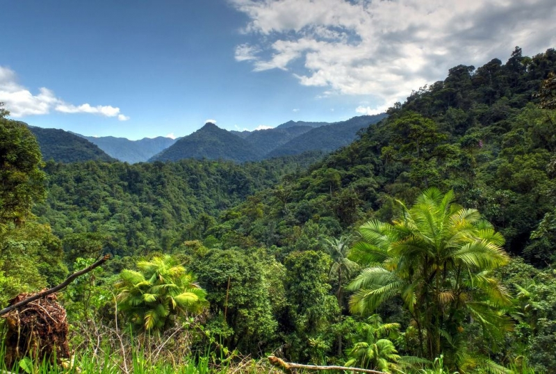Dense forests are the natural vegetation of Equatorial type of climate