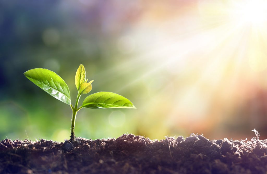Through the process of photosynthesis, Carbon dioxide is pulled from the air to make plant food from Carbon.