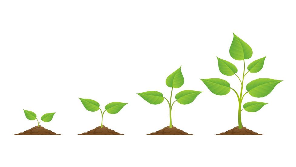Các thành phần trong đất giúp cây có đủ dưỡng chất