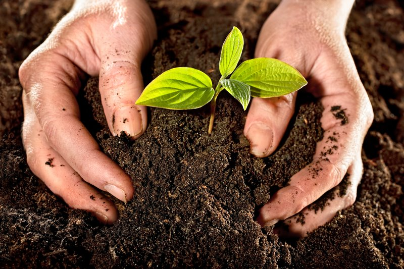 Soil is formed from the weathering of rocks and minerals.